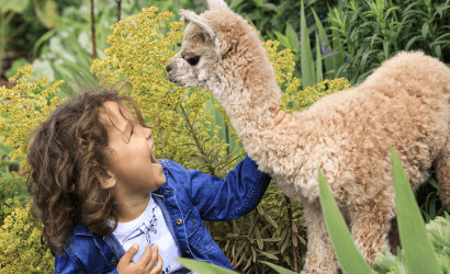 Child with a baby llama